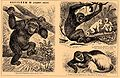 Brockhaus and Efron Encyclopedic Dictionary b42 496-3.jpg