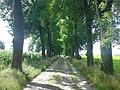 Brukowana aleja prowadząca do Pałacu w Cieleśnicy - panoramio.jpg
