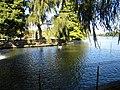 Bucuresti, Romania, Parcul Herastrau (Imagine de pe lacul Herastrau cu lebada); B-II-a-A-18802.JPG