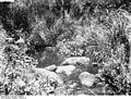 Bundesarchiv Bild 105-DOA0573, Deutsch-Ostafrika, Moschiurwald, Bach.jpg