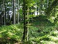 Burgstall Lichtenegg GO-3.jpg