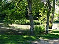 Buriton pond - geograph.org.uk - 524692.jpg