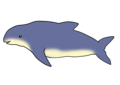 Burmeister's porpoise (Phocoena spinipinnis) PUBLIC DOMAIN STOCK IMAGE.png