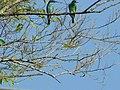 Burung 3.jpg