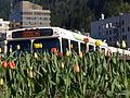 Bus 5130017.JPG