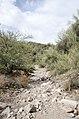 Butcher Jones Trail to Pinter's Point Loop, Tonto National Park, Saguaro Lake, Ft. McDowell, AZ - panoramio (164).jpg