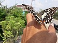 Butterfly20171025 124041.jpg