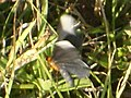 Butterfly - panoramio.jpg
