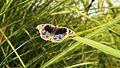 Butterfly Beauty.jpg