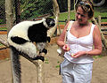 Bw lemur with person arp.jpg