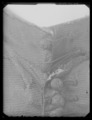 Byxor av svart sidenrips - Livrustkammaren - 11142.tif