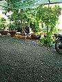Cà phê sân vườn ở Bình Tân, tháng 6 năm 2018 (4).jpg