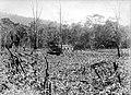 COLLECTIE TROPENMUSEUM 'Tuin' in de bergmeer streek. Het bos is gekapt daarna gedroogd gebrand waarna er maïs is geplant Midden Boeroe TMnr 10011180.jpg