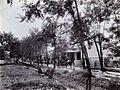 COLLECTIE TROPENMUSEUM Laan met de huizen van medewerkers van de suikeronderneming Ketegan Soerabaja TMnr 60052480.jpg