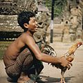 COLLECTIE TROPENMUSEUM Portret van een man met een vechthaani TMnr 20027297.jpg