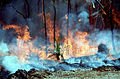 CSIRO ScienceImage 329 Controlled Burning During Dry Season.jpg