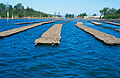 CSIRO ScienceImage 4654 Oyster leases on the Clyde River at Batemans Bay NSW 2004.jpg