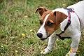Cachorro Preparado (156012015).jpeg