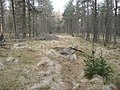 Cairn in the forest - geograph.org.uk - 1233462.jpg