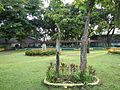 Calauan,Lagunajf4446 03.JPG