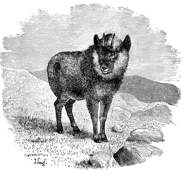 File:Cambridge Natural History Mammalia Fig 176.png