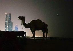 Camel at night.jpg