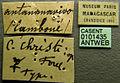 Camponotus christi casent0101435 label 1.jpg
