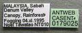 Camponotus saundersi casent0179025 label 1.jpg