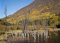 Caribou Mountain near Carcross, Yukon (15077383917).jpg