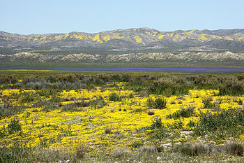 Carrizo Plain National Monument Travel Guide At Wikivoyage