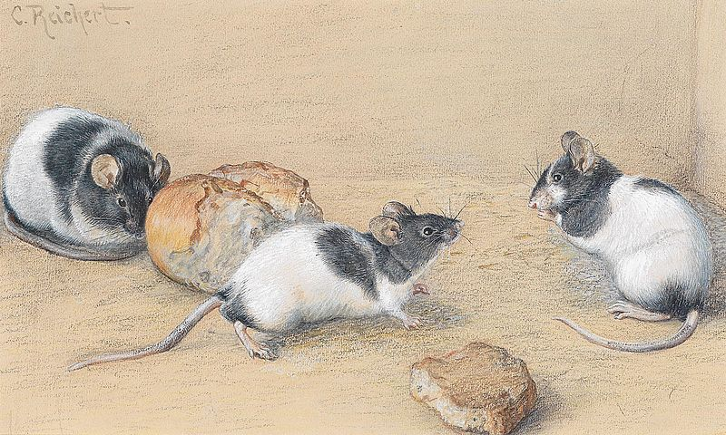 File:Carl Reichert Mäuse.jpg