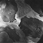 Casement Stream, outwash delta, August 22, 1979 (GLACIERS 5299).jpg