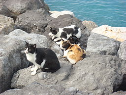 Cats on Beach