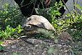 Centar za razmnožavanje kornjača.JPG