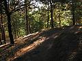 Cerro Condell, sendero (17316470785).jpg