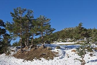 Cerro Minguete - 02.jpg