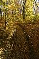 Chemin entre deux grillages (22508064777).jpg