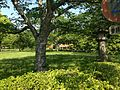 Cherry tree and Shinkyo Bridge of Usa Shrine.JPG