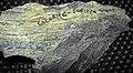 Chlorite-sericite schist (Neoarchean; Soudan Mine, Soudan, Minnesota, USA) 2 (22460802472).jpg