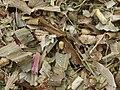 Chopped maize - geograph.org.uk - 598699.jpg