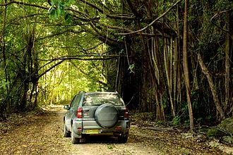 Christmas Island - Car moving across the backroads of Christmas Island