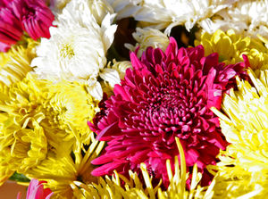 Etiquette in Europe - Chrysanthemums are only appropriate for funerals.