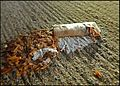 Cigarette butt on wet sidewalk after heavy rain Mégot 04.jpg