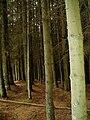 Clocaenog Forest - geograph.org.uk - 207417.jpg