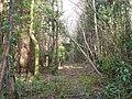 Coed y Faenol - Vaynol Woods - geograph.org.uk - 365453.jpg