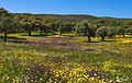 Colorful spanish meadow in spring (13868896905).jpg
