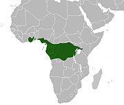 Range includes southern regions of Ghana, Nigeria and Cameroon, and throughout Equatorial Guinea, Gabon, Republic of the Congo and Democratic Republic of the Congo.