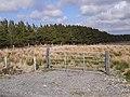 Coniferous plantation near Bellanaboy - geograph.org.uk - 1853259.jpg