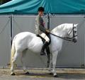 Connemara Pony, Dublin Horse Show 2008.png