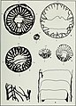 Corals from the Chouteau and related formations of the Mississippi Valley Region (1944) (20689971222).jpg